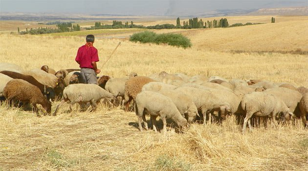Çobanlara Eğitim Kursu