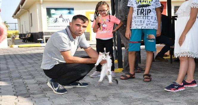 Aksaray Belediyesi sokak hayvanlarına şefkat eli uzatıyor