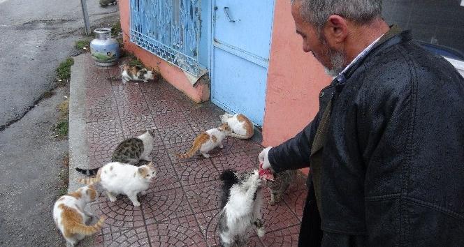 Kediler her gün onun yolunu gözlüyor