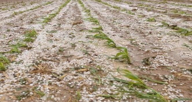 Aksaray'da dolu yağışı tarım arazilerine zarar verdi