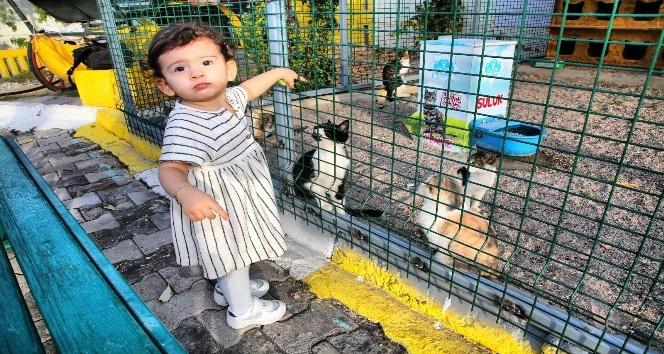 Aksaraydaki hayvan barınağında kedilere özel alan oluşturuldu