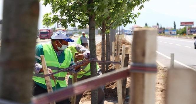 Aksarayda E-90 Karayolu şeker akçe ağaçları ile donatılıyor