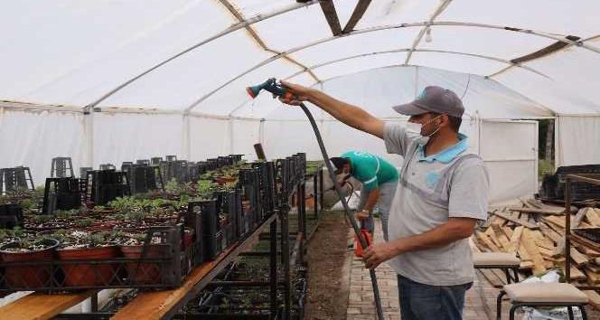 Aksaray Belediyesi yetiştirdiği 65 bin çiçek fidesi ile park ve bahçeleri donattı